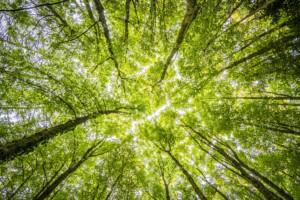 economia circolare_foreste